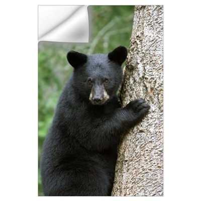 Black Bear (Ursus americanus) cub in tree safe fro Wall Decal