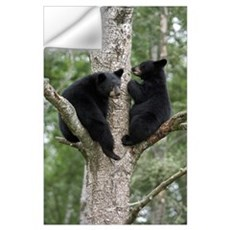 Black Bear (Ursus americanus) two cubs in tree, Or Wall Decal