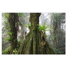Bromeliad and tree fern at 1600 meters altitude in Poster