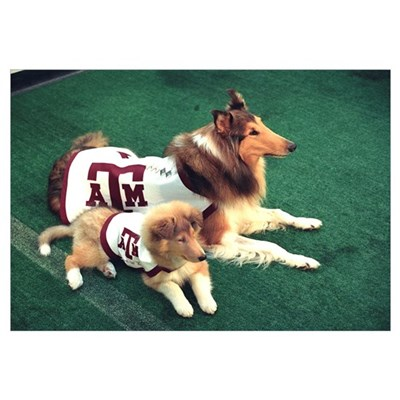 Texas A and M Pictures Reveille and Trainee Framed Print