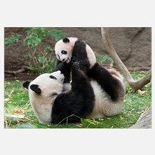 Giant Panda (Ailuropoda melanoleuca) mother and cu