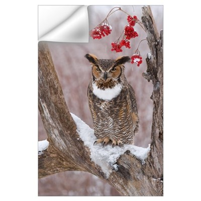Great Horned Owl (Bubo virginianus) in winter, How Wall Decal