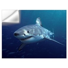 Great White Shark (Carcharodon carcharias), Neptun Wall Decal
