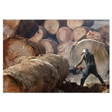 Logger cutting tree trunk, Cameroon
