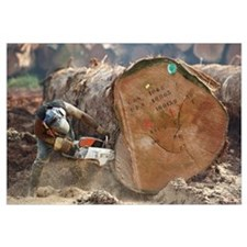 Logger cutting trunk of rainforest tree, Cameroon