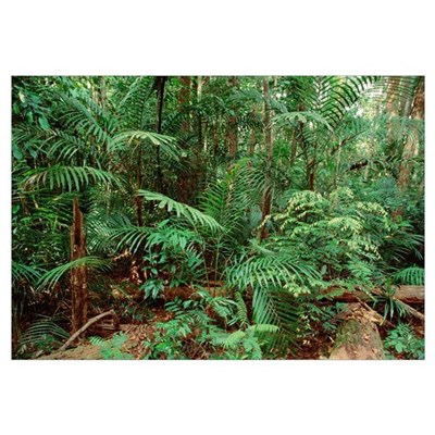 Mixed lowland dipterocarp tropical rainforest, Tam Canvas Art