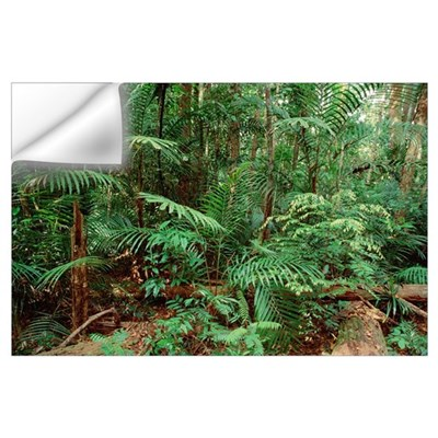 Mixed lowland dipterocarp tropical rainforest, Tam Wall Decal