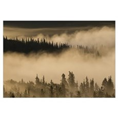 Morning fog near Swan Lake along the Alaska Highwa Framed Print
