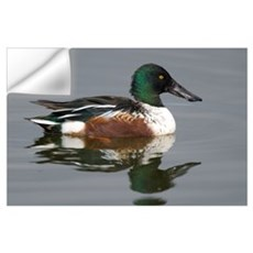 Northern Shoveler (Anas clypeata) male in breeding Wall Decal