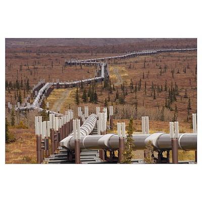Oil pipeline crossing taiga, Alaska Poster