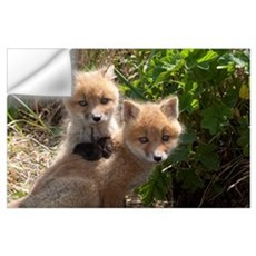 Red Fox (Vulpes vulpes) kits playing, Katmai Natio Wall Decal