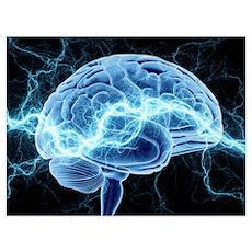 Human brain, conceptual artwork Poster
