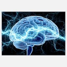 Human brain, conceptual artwork