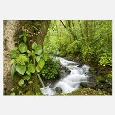 Creek flowing through rainforest, Costa Rica