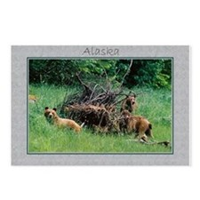Alaska Brown Bear Cubs Postcards (Package of 8)