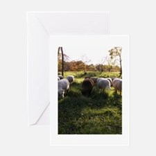 Grazing at Sunset Greeting Card