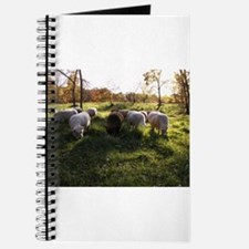 Grazing at Sunset Journal