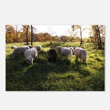 Grazing at Sunset Postcards (Package of 8)