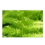 Wild Fern Postcards (Package of 8)