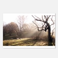 Light at Play Postcards (Package of 8)