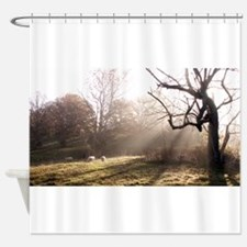 Light at Play Shower Curtain
