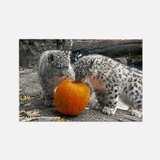 Baby Snow Leopards and Pumpkin Rectangle Magnet