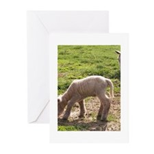 Investigating Greeting Cards (Pk of 20)