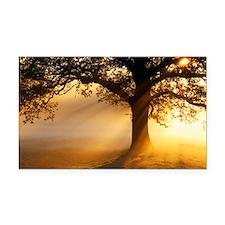 Oak tree at sunrise - Car Magnet