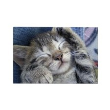 Sleeping kitten 3 Rectangle Magnet