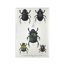 Beetle Insects Rectangle Magnet