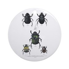 Beetle Insects Ornament (Round)