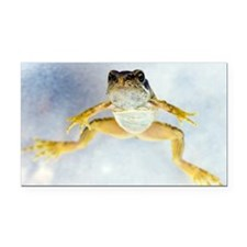 Young frog at 12 weeks - Car Magnet