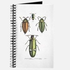 Beetle Insects Journal