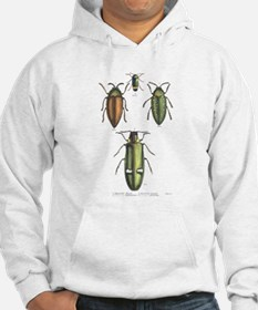 Beetle Insects (Front) Hoodie