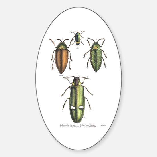 Beetle Insects Oval Decal