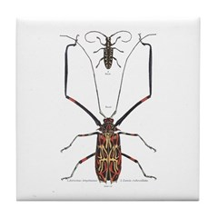 Brazil Beetle Insects Tile Coaster