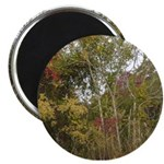 Fall Trees Photography Magnet