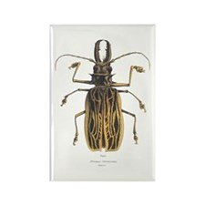 Brazilian Prionus Beetle Rectangle Magnet