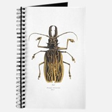 Brazilian Prionus Beetle Journal