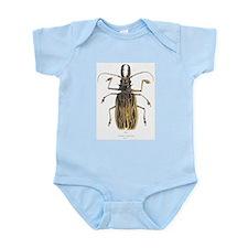 Brazilian Prionus Beetle Infant Creeper
