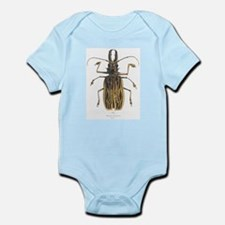 Brazilian Prionus Beetle Infant Creeper