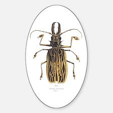 Brazilian Prionus Beetle Oval Decal