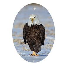 Mad Eagle Ornament (Oval)