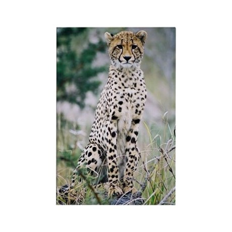 Rectangle Magnet Wild Cheetah Photo