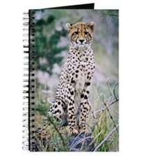 Journal Wild Cheetah Photo