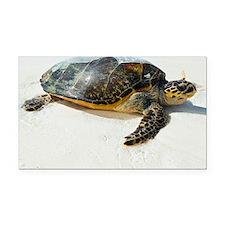 Hawksbill sea turtle - Car Magnet