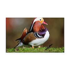 Male mandarin duck - Car Magnet