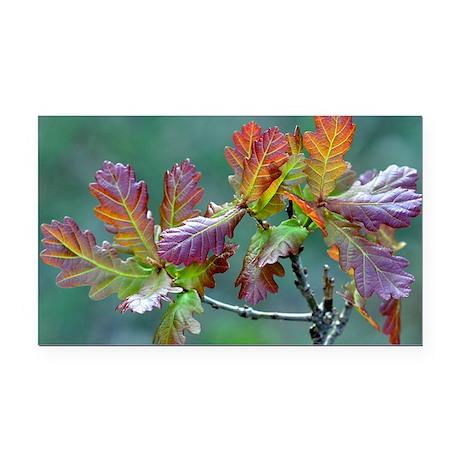 Oak (Quercus sp.) - Car Magnet