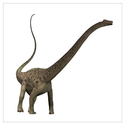 Diplodocus dinosaur Poster