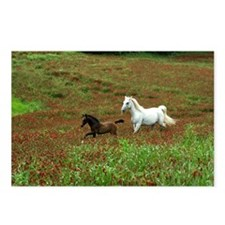 Cool Lipizzan Postcards (Package of 8)